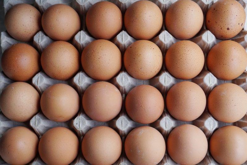 L'importance des protéines pour les muscles